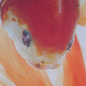 金魚の展示会。金魚は人と同じ生き物。