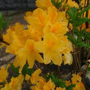 日の陰、花は美しく輝いていることに皆が気付いています。