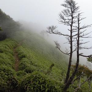 下山時は一転して霧に包まれる 赤薙山(完結編)