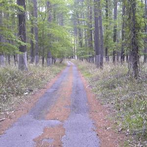 下りの林道歩きは登りより時間がかかった 男体山再挑戦(完結編)