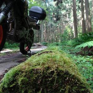 梅雨明けの湿地と林道と