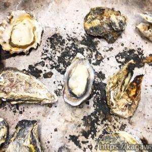 牡蠣焼き わたなべ さぬき市 / 店員に聞いた食べ放題攻略法!予約はお早めに!
