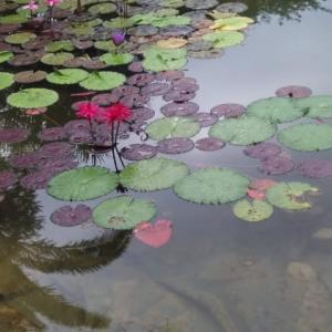 昨年の今日は北川村モネの庭に行っている