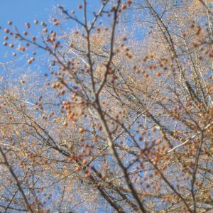 全てが落ち葉に覆われています