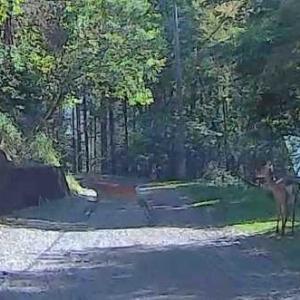 鹿の体験学習