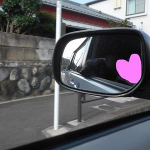 秋に張り切るゆうらさん(^^;)
