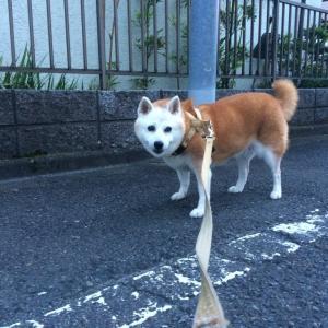 犬もコロナ感染のニュース