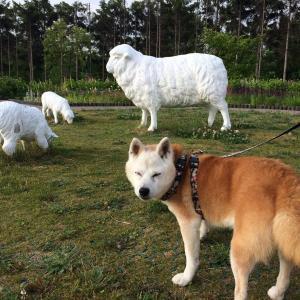 日本最北のサービスエリアで、綿羊にこんにちはして帰宅