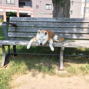 公園のベンチでうたた寝してるお年寄りの気持ちがよく分かった