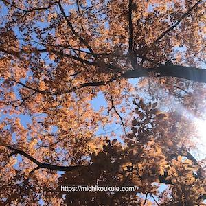 季節の変わり目、ウクレレも変わり目、ウクレレから日本の四季を感じる