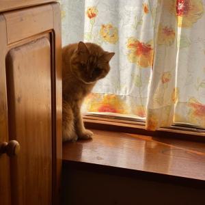 今日のお猫様