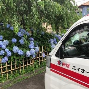関東は梅雨最盛期