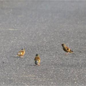 ~野鳥の大群は飛翔中、如何に衝突を回避をしているのだろうか?~