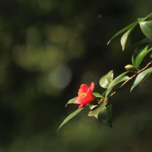 ~カモの不思議な行動・日本の原風景~