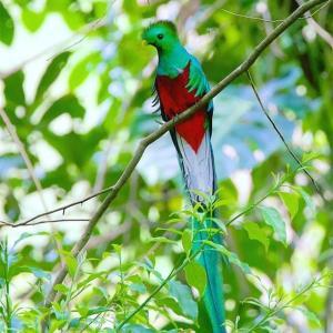 """~♪ 世界一美しい鳥""""ケツァール ♪~・・・ジョン・デンバー:カントリー・ロード"""