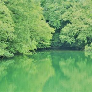 ~森の小径を分け入って見ました。~蝶々ばかりでした。:甘納豆・抹茶入り蒸しパン