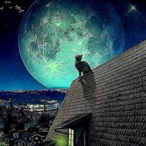 ~中秋の名月とお月見~・・・ヤマガラ食に勤しむ。