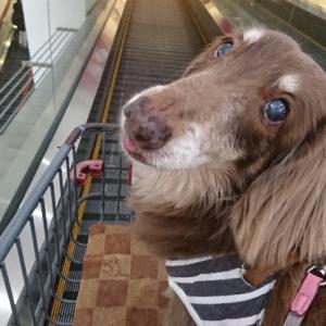 愛犬は老犬@長生き願う。
