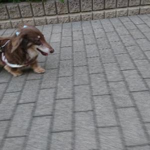 老犬のお散歩はカートも使って@秋を感じる♪