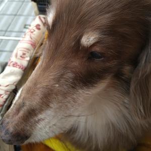 体感的に今年一番寒い日@愛犬ヘルニア頑張るぞ!