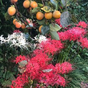 秋と9月の結果