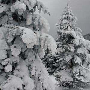 樹氷 北八ヶ岳
