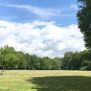【フランクフルトの公園・庭園】在住者おすすめの自然スポットで癒されよう!
