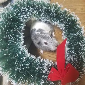 クリスマスムードのむーちゃん