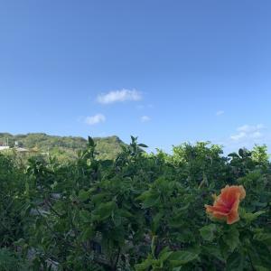 台風19号ハギビスを避けるように沖縄に行った話