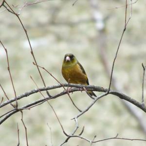 寒山の庭にやってくる野鳥たち
