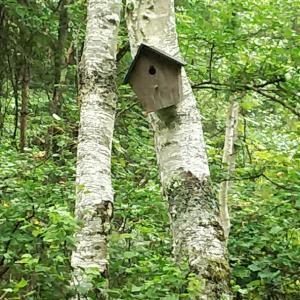 大変!野鳥の巣箱がスズメバチの巣になっちゃった