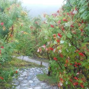 紅葉の立山&リハビリトレッキング⁉️