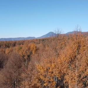 冬枯れた森と北八ヶ岳方面を空から