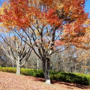 永明寺山市民公園