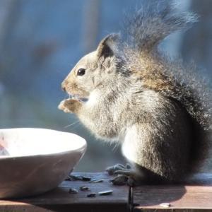 初冬の給餌台