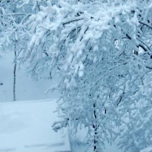 大雪着雪注意報