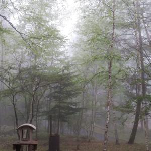 雨にけぶる新緑の森