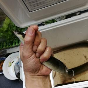 大阪の街中で天然ウナギを釣って食べる(淀屋橋~北浜駅周辺)