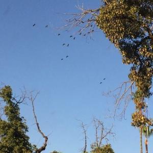 空に飛び交う青い鳥