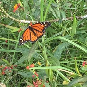 もし私がモナーク蝶だったら、飛んで行って、一緒にすごすことができるのに