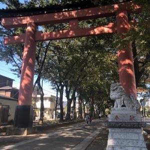 氷川神社の樹