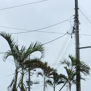 台風の影響で風が強い