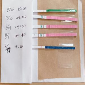 31歳 不妊治療 ブログ【高温期11日目】 フライング 妊娠検査薬をしてみた