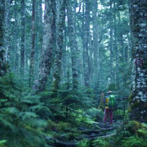 髙木敏克の詩集「発光樹林帯」