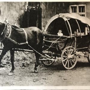 カフカ・田舎医者をめぐる馬の冒険