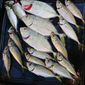 国道を入ってすぐの釣り場 北塩屋(日高港湾)でのサビキ釣り「餌もあり 早起きしたので 試し釣り」