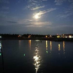 投げサビキ 半夜釣り「今日こそは 力いっぱい 釣りたいと」