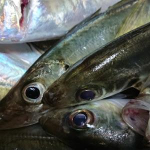 おかず釣り師が行く!「海荒れて 季節外れの あたたかさ」ジグ遠投 鯵投げサビキ釣り