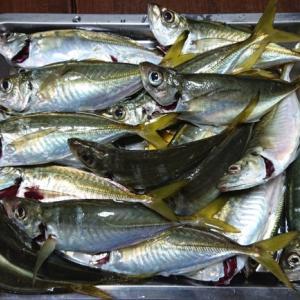サビキ釣りでの撒き餌とは?少しでも多く釣りたい!
