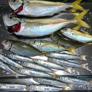おかず釣り師が行く!「高水温 深い釣り場で 鰺狙い」#鰺釣り #カゴ釣り #イワシ釣り